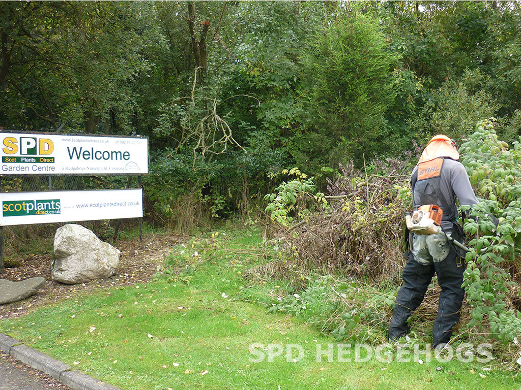 SPD at Hedgehogs Nursery