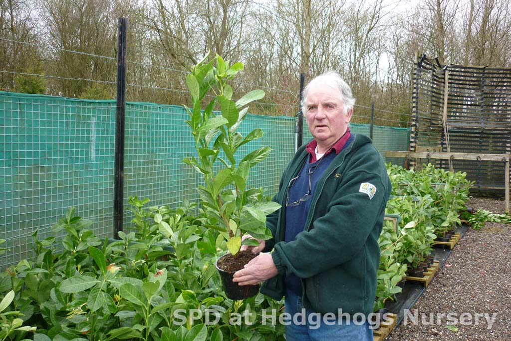 Hedging Plants of all types