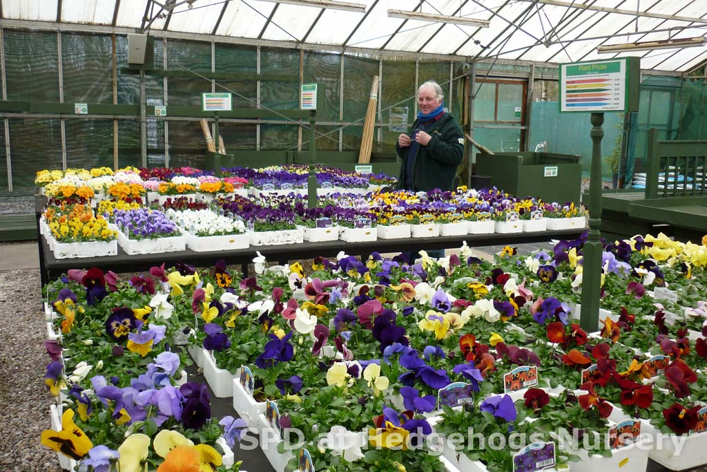 Just arrived – selection of spring bedding plants