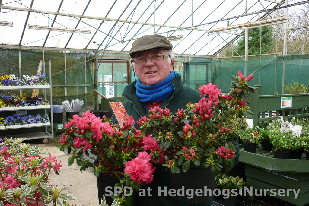 Robert with new Azaleas have arrived!  Fully Budded and ready for the garden