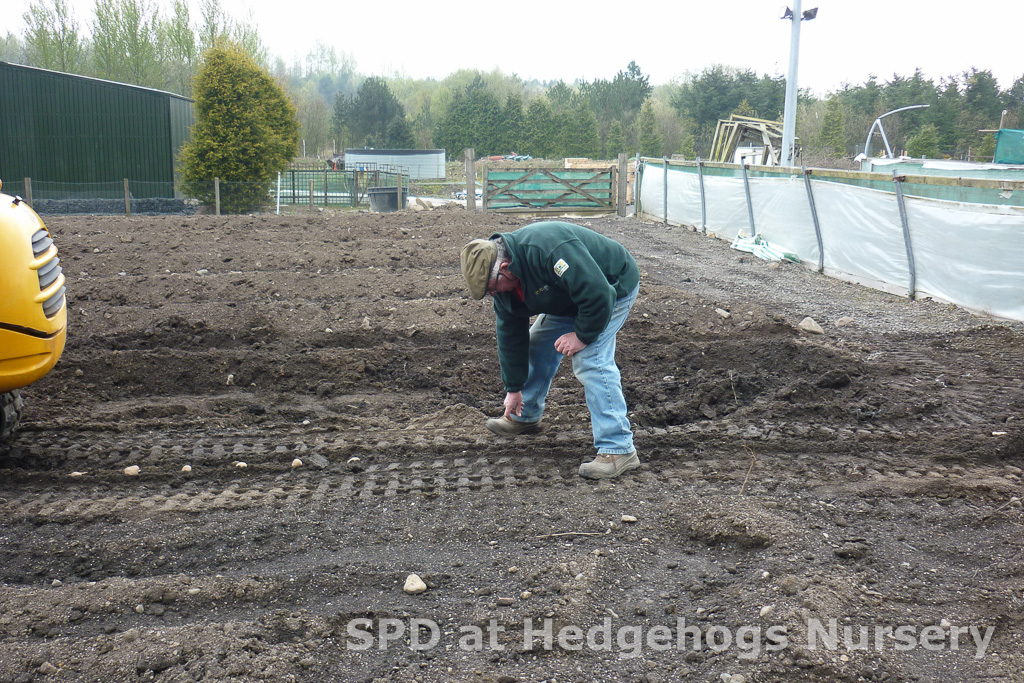 Hedgehogs Nursery potato patch April '14