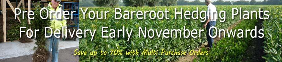 Pre order bareroot November 2015