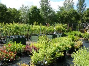 allotment plants for spring gardens